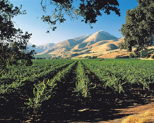 Santa Barbara, CA--Santa Maria Valley is fast becoming recognized as the Santa Barbara Valley's prime growing region for premium pinot ...