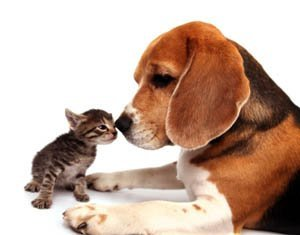 The discount applies for up to two animals per household and is exclusively for pet owners who live in Will ...