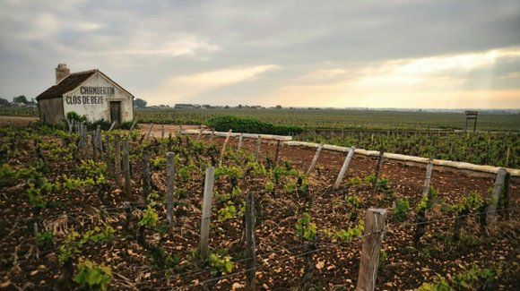 If any grape demands contemplation, it's Pinot Noir.