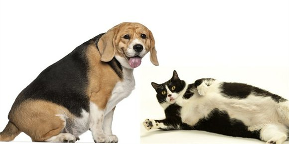 Like humans, pets can become obese and develop excess body fat, which can lead to serious health problems, such as ...