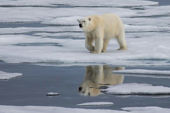 Dear EarthTalk: Why is the Arctic such a crucial area to focus on in efforts to stem global warming?