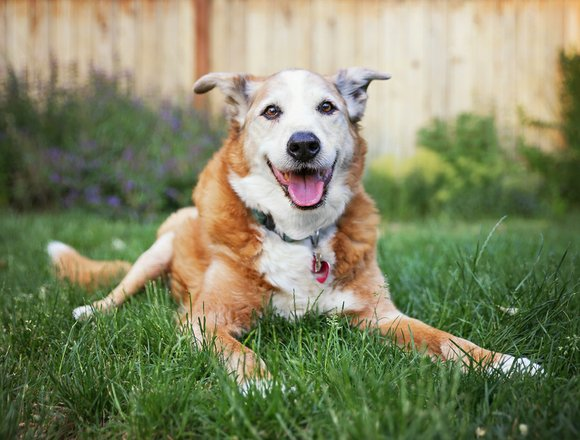 Pets are more than just our companions—they are a part of the family. As your pet ages, it is important ...