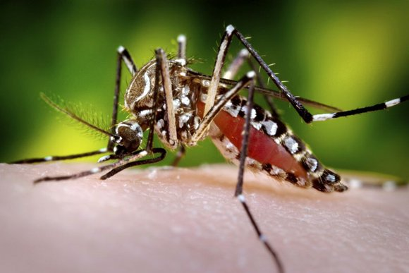 Zika virus, first discovered in Uganda's Zika Forest in 1947, is transmitted to humans and other mammals through the bite ...