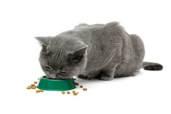 As a pet owner, it is important to know your cat's normal behavior to recognize subtle changes that may lead ...