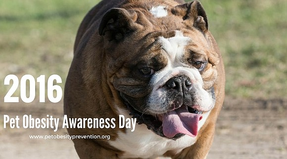 On Pet Obesity Awareness Day experts from PetPace, a health monitoring collar for dogs and cats, especially those that are ...