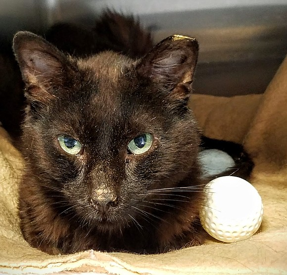 SPROCKET Such a lovely young boy! Sprocket has the most beautiful chocolate brown coat – and so soft and silky. ...