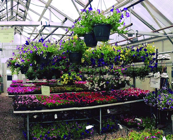 Trinity Services' Horticulture Program is spending the final weeks of the winter looking ahead to spring. Program participants are getting ...
