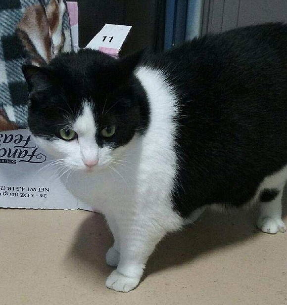 COMET Comet is a nice, easy-going guy who likes to talk. He loves to play with human companions or by ...