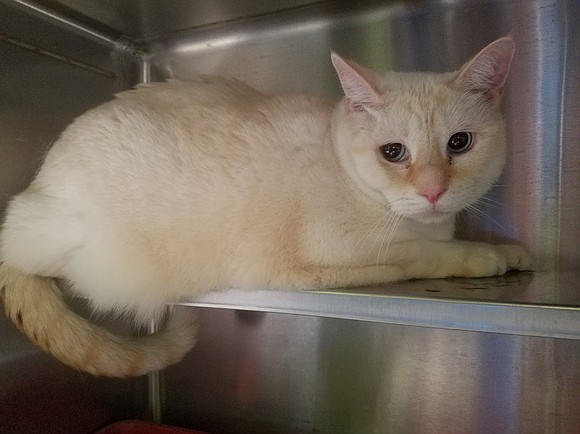 EZRA Ezra is a cute, independent, low-key cat. This quiet boy is adorably entertaining when he scoops water out of ...