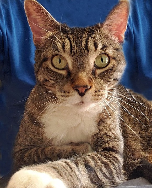 TUPAC Tupac Skakat is a big hearted, gentle giant who loves attention, hugs and being scratched. He especially loves getting ...