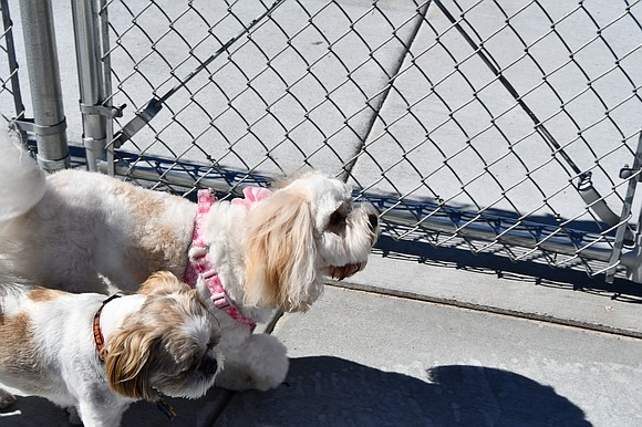 A ribbon-cutting held July 6 has unleashed a new era for small dogs at Hammel Woods in Shorewood. Canines weighing ...
