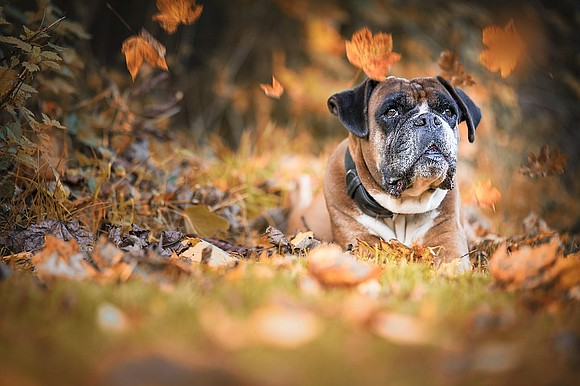 Thanksgiving is a special holiday that brings together a few of our favorite things—family, friends, and food. While your furry ...