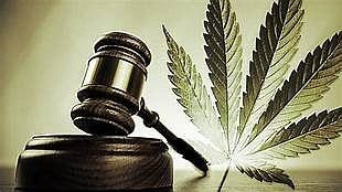 State Senator Toi Hutchinson (D-Chicago Heights) passed a plan out of the Senate that would allow legal marijuana businesses in ...