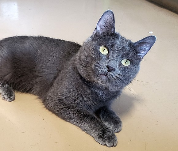 POPPY Poppy is a very gentle, friendly and affectionate cat that loves being with people. She comes up to you ...