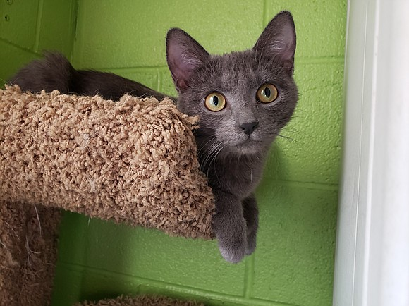 GIA Gia is a little doll who's a bit on the shy side. She's adorable, sweet, and is a very ...