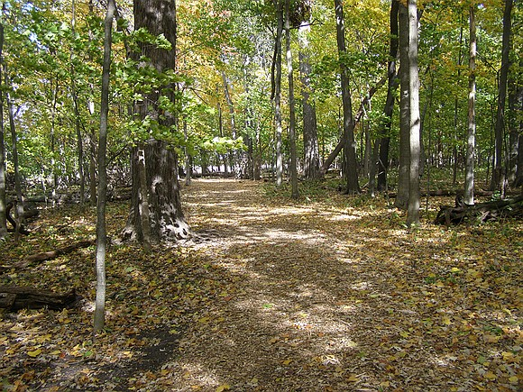 The Conservation Foundation was awarded an $80,000 grant from CITGO to begin restoration work in the O'Hara Woods Nature Preserve. ...