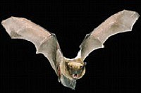 The Will County Health Department reported two more bats being identified as positive for rabies, bringing the total number for ...