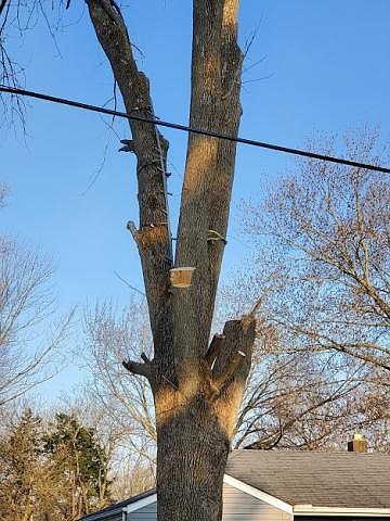 URBANA, Ill. — Trees are large components in the landscape, both in size and life span. When pests, pathogens, or ...