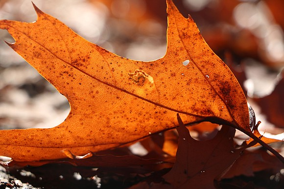 """Will County Forest Preserve The Nature Foundation of Will County's """"Oaktober! Native Tree & Shrub Sale"""" will begin online at ..."""