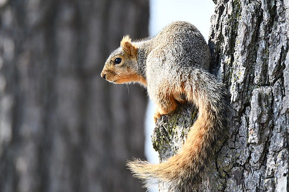 Help clean a preserve, take a hike or learn about the underappreciated animals you can see out your window during ...