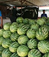 Watermelons in Liberia