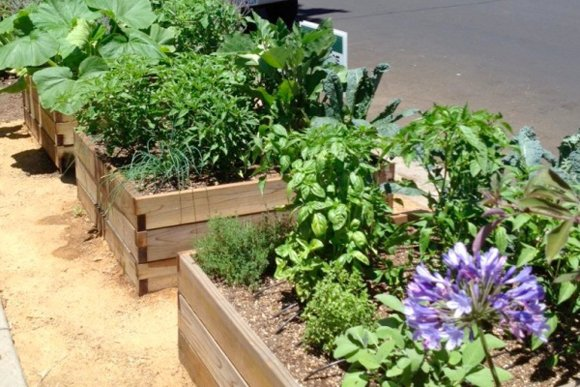 LOS ANGELES, Calif. — The Los Angeles City Council gave its blessing today to neighborhood gardeners who want to plant ...
