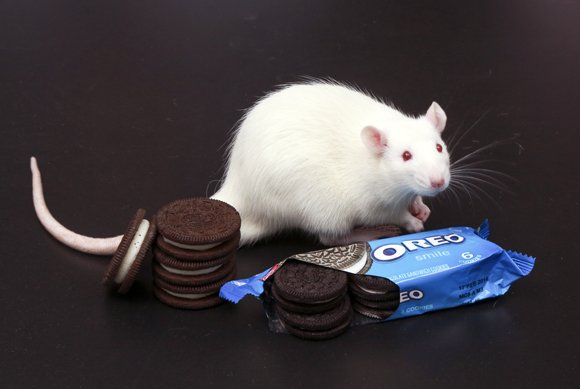 Anyone who's ever eaten an Oreo knows how difficult it can be to eat just one. Scientists have long suspected ...