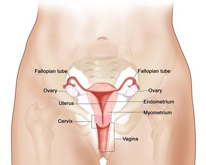 Cervical Health Awareness Month is a chance to raise awareness about how women can protect themselves from HPV (human papillomavirus) ...
