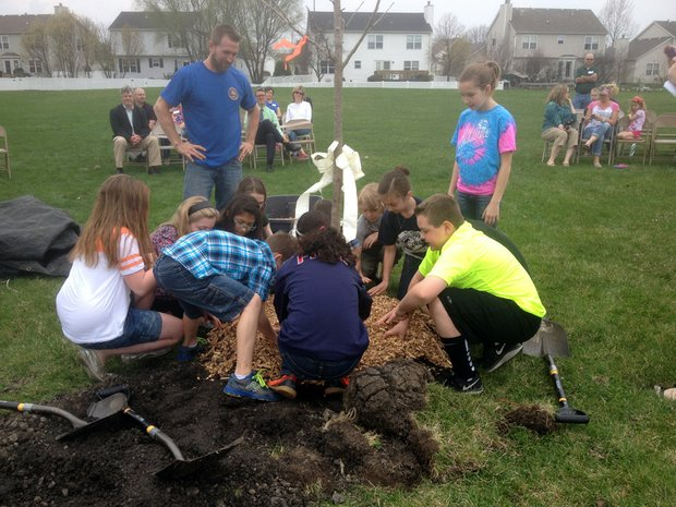 Students gather around the base of the tree to spread mulch.