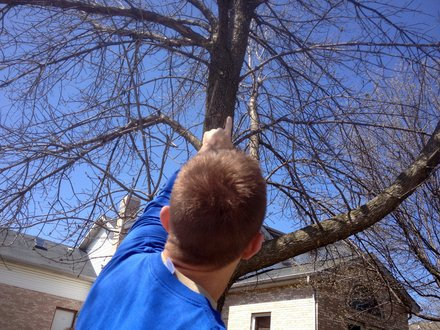 Jim Tiber points to a part of a tree damaged by woodpeckers that go after the Emerald Ash Borer after the bugs infested the tree.