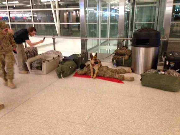 Canine companions are especially helpful in giving overtaxed soldiers a break because they'll stand guard while their owners sleep, experts ...
