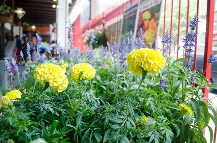 Flowers for sale at La Marqueta. 08.07.14
