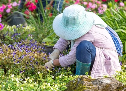 More than 41,200 people across the nation were injured in 2012 while working in their gardens, reports the U.S. Consumer ...