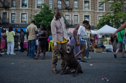 Even pets got dolled up and their nails done. #HarlemWeek (08/17/2014)