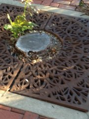 Example of a spot where a tree was cut down in downtown Joliet but the stump remains.