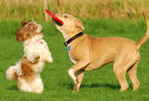 The permit can be used at all of Will County's dog parks, located in Joliet, Shorewood, Homer Glen, Naperville and ...