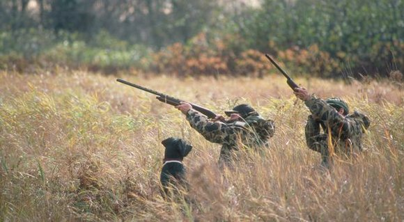 Hunters in Illinois may use crossbows during archery hunting seasons, including the Illinois Archery Deer Season and the Illinois Fall ...