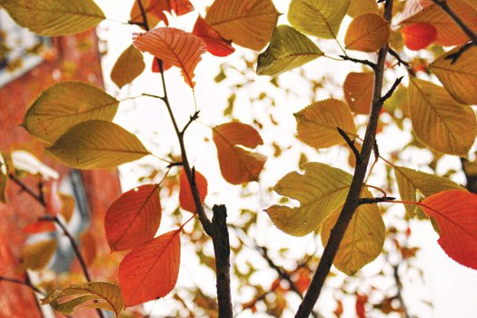 Signs of autumn in Richmond's East End