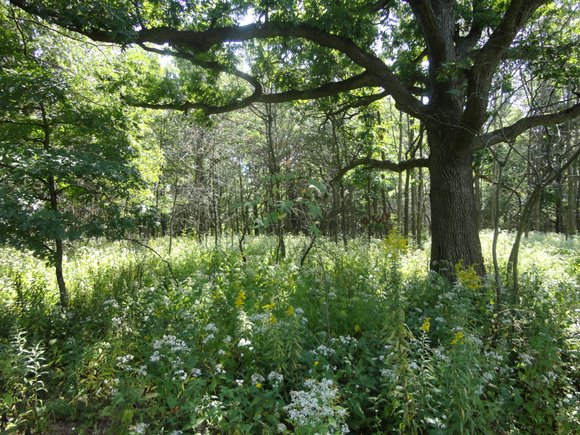 """Chicago Wilderness presented the Will County Forest Preserve District with its """"Excellence in Ecological Restoration"""" award for work at the ..."""
