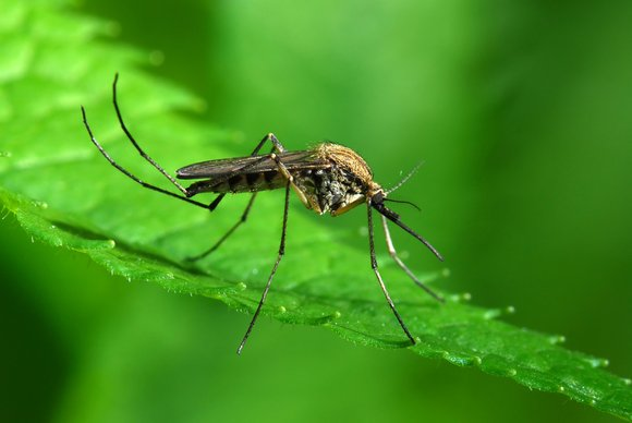 Mosquito samples collected from a Will County Health Department monitoring site in Crete tested positive for West Nile Virus (WNV) ...