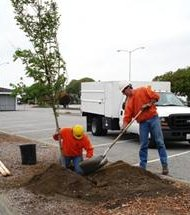 Romeoville will share the cost of buying and planting new parkway trees with residents who buy purchase them by June 15.