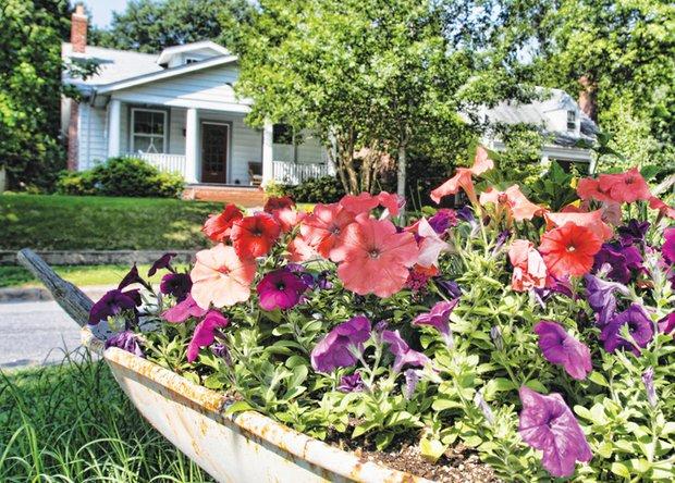 Petunia colors pop in North Side