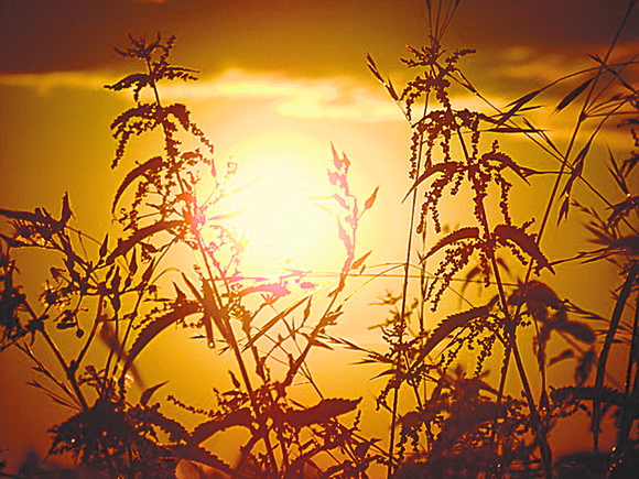 """St. Francis of Assisi (think of the new pope) wrote a wonderful poem called """"The Hymn of the Sun."""""""