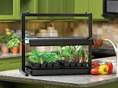 Add some homegrown flavor to your winter meals. From micro-greens to tomatoes, it is possible to grow produce indoors.