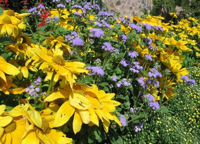 Grow a beautiful flower garden with minimal care by investing a bit of time at the start of the season ...