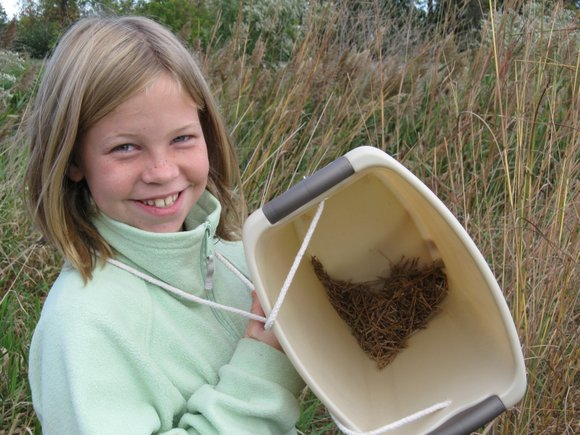 Help improve the forest preserves by gathering valuable seeds or removing invasive species during a Forest Preserve District of Will ...