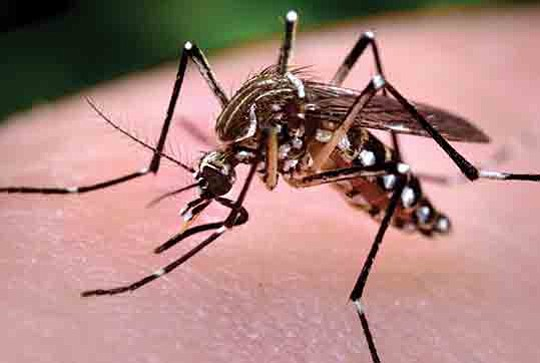 Almost half of the 22 people from Los Angeles County who tested positive for West Nile virus so far this ...