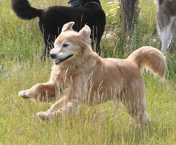 Veterans and active-duty military will pay less for Forest Preserve District of Will County dog park permits in 2018 thanks ...