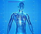 Human body/X-ray/health