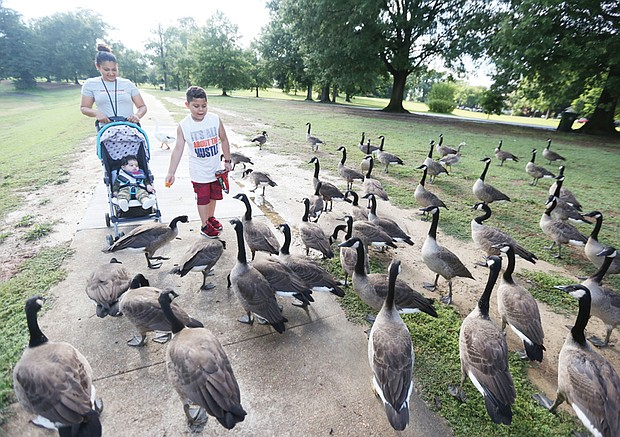 No ducks, just geese Elizabeth Rodriguez and her son, Carlos, 6, introduce the family's latest addition, 9-month-old Jake, to a gaggle of geese last Sunday. The family was strolling in Byrd Park, feeding the ducks and geese.